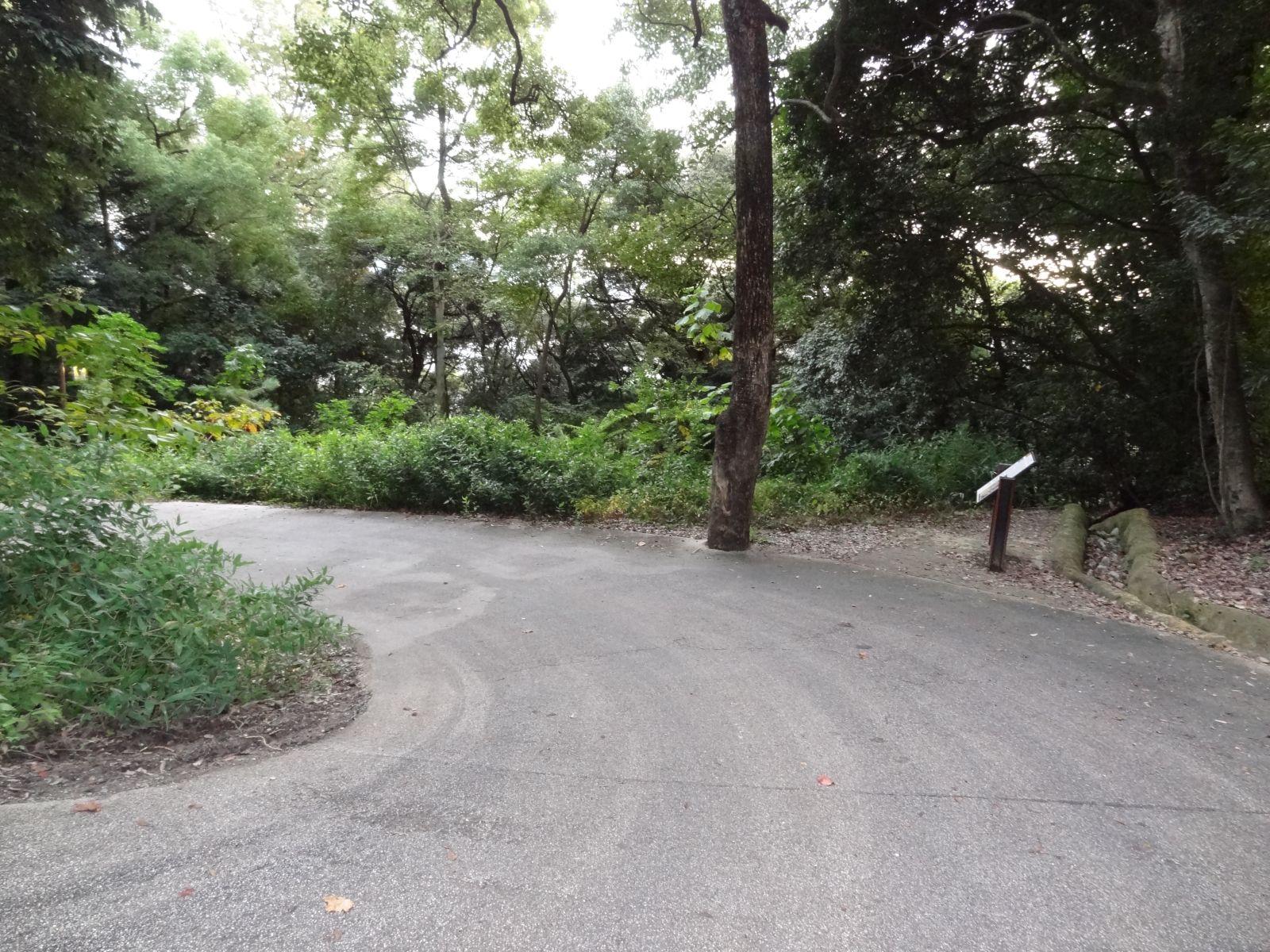 秋の松山城(県庁裏登城道)の写真です。クリックすると拡大します。