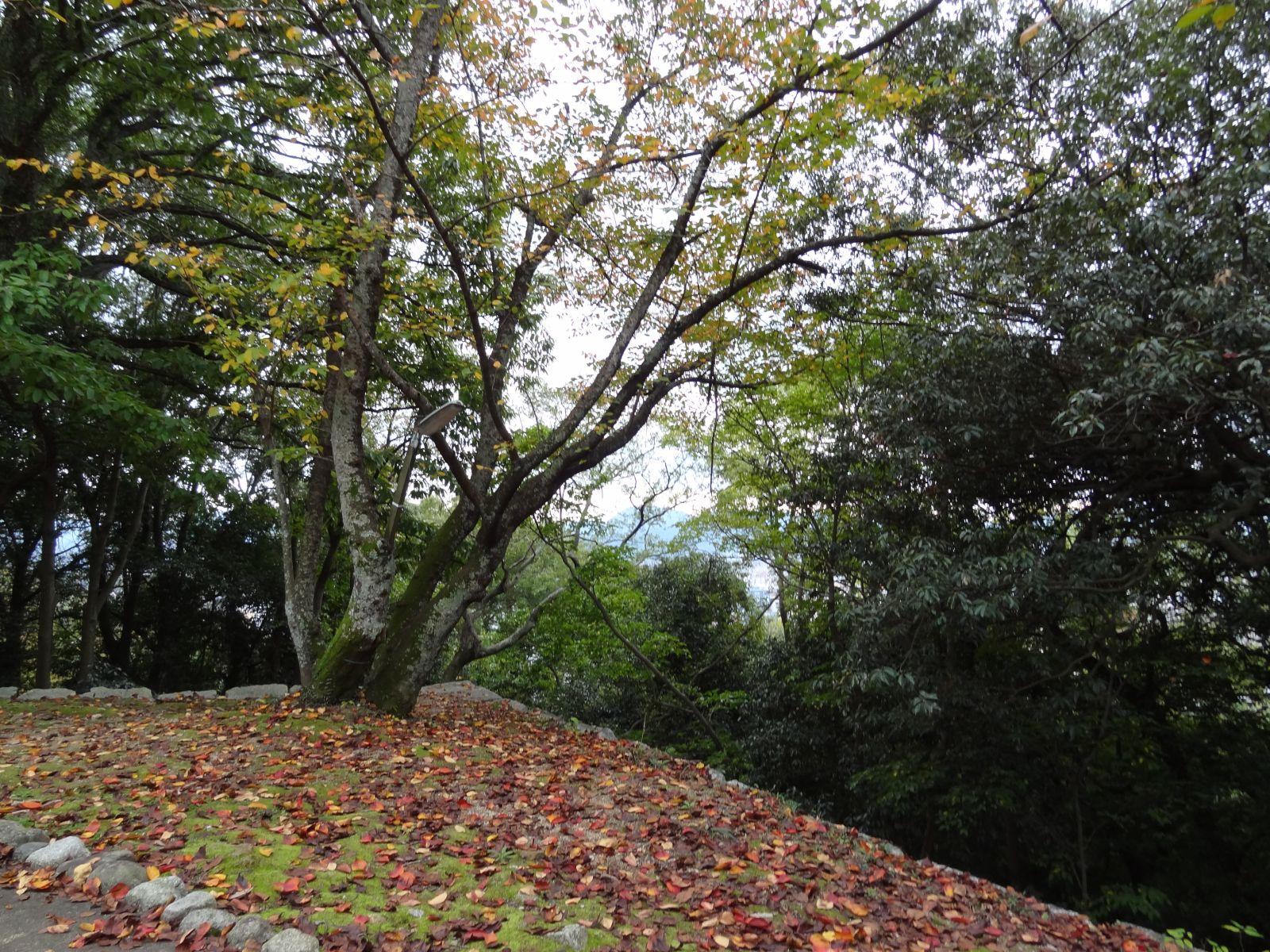 matsuyamajou20111107-1447