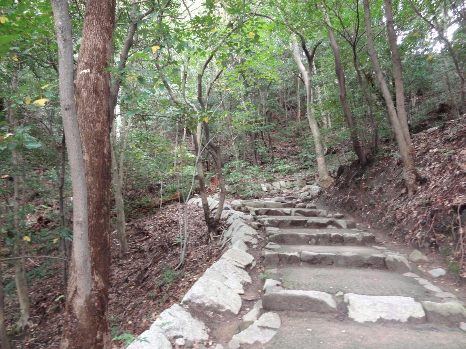 matsuyamajou20111107-1117