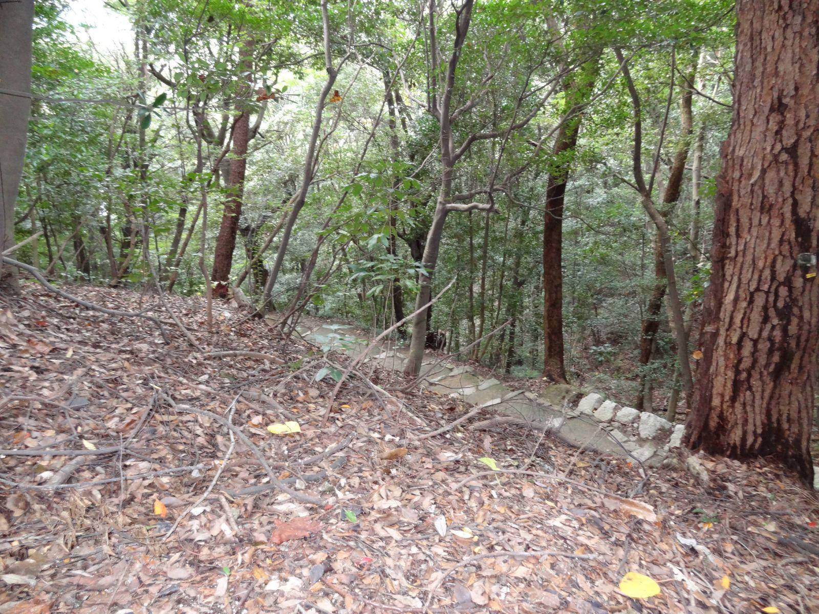 matsuyamajou20111107-1121